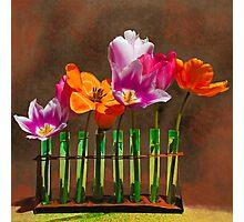 Tulip experiments Photographic Print