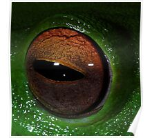 Eye Of The Frog Poster