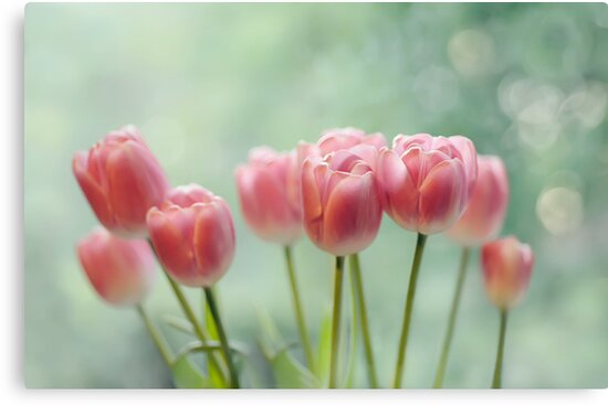 Tulips by Lifeware