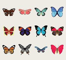 Butterflies by Dorothy Timmer