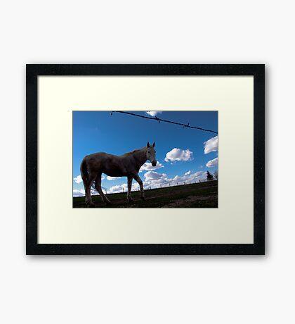 Spearfish South Dakota - Winnie. Framed Print