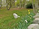 Sylvie Enjoys the First Grass Cutting of Spring - 2011 by Jack McCabe
