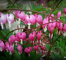 Spring is Bleeding by Debbie Robbins