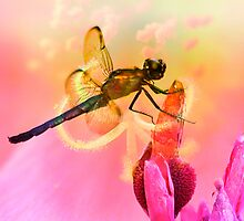 In The Pink by Brenda Burnett