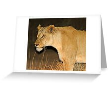 Lioness on the hunt! Greeting Card