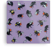 Red-Tailed Bumblebees Metal Print