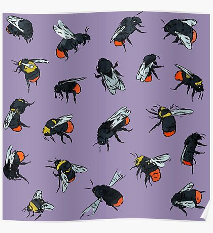 Red-Tailed Bumblebees Poster
