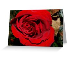 Holiday rose Greeting Card