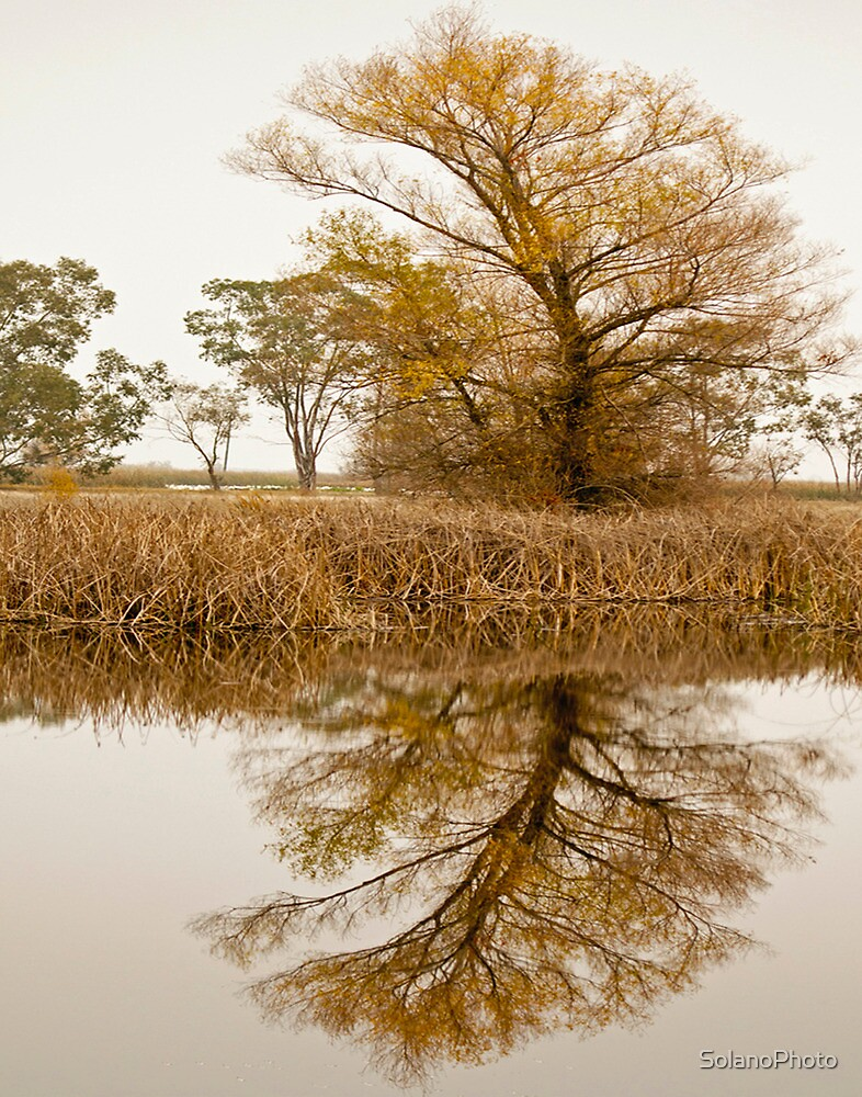 Reflection of a tree by SolanoPhoto