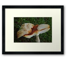 Bird scupture - Toadstool. Framed Print