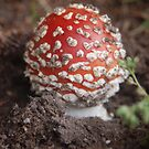 Toadstool by lettie1957