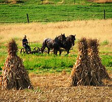 Amish Country - Fall Harvest by Kam Johnson