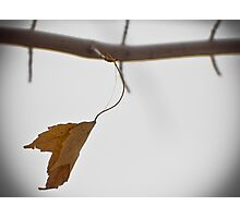 Hanging in There Photographic Print