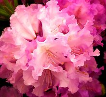 All Pink by Simon Duckworth