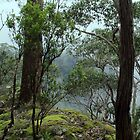 New England National Park by Kitsmumma
