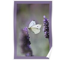 Lavender Butterfly Poster