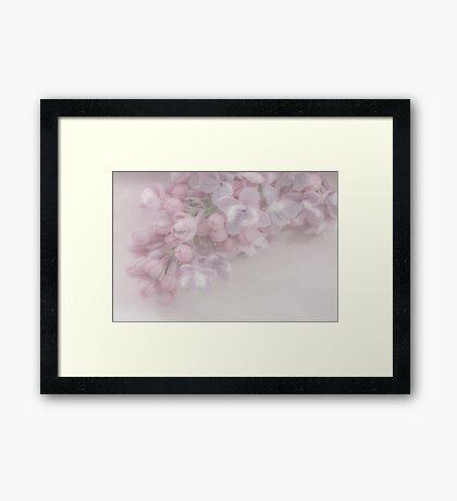 Oh So Gentle - Lilac Sprig Macro Framed Print