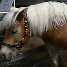 "Haflinger - ""Lady"" by louisegreen"