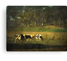 The bush, the cows, the gums ... Canvas Print