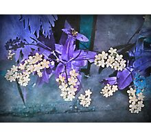 Dreamy Forget Me Nots Photographic Print