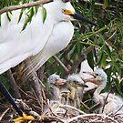Snowy's Nest by Kathy Cline