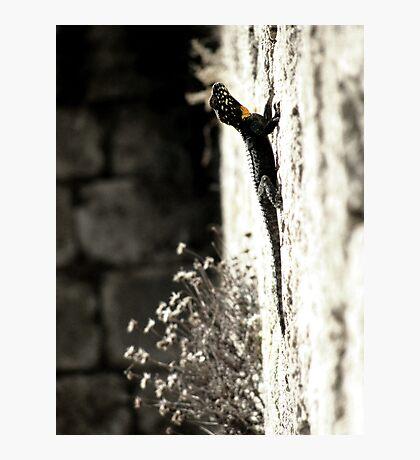 Dragon Lizard - Byblos Ruins, Lebanon. Photographic Print