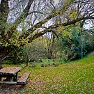 Yackandandah Autumn Series ~ Commissioner's Creek Picnic Spot by Jane Keats