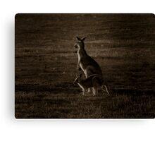 Kangaroo Mother & Joey - Melbourne, Australia. Canvas Print