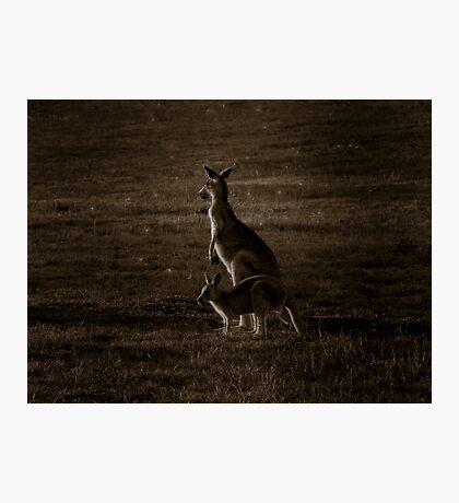 Kangaroo Mother & Joey - Melbourne, Australia. Photographic Print
