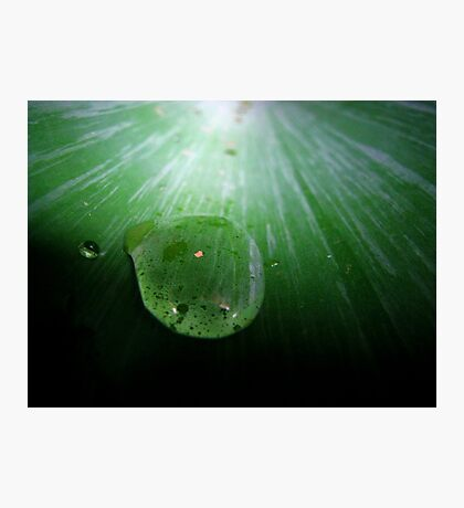 Droplet on Fern. Photographic Print