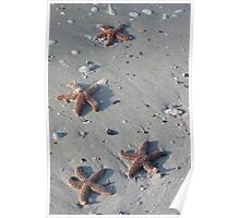 Starfish on Beach Poster