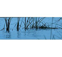 Blue Reeds Photographic Print
