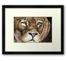 Lions face Framed Print