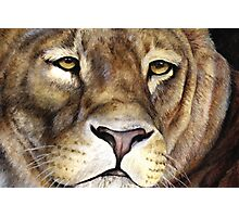 Lions face Photographic Print