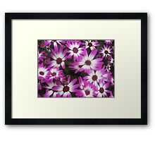 White and Purple (Wistow 2011) Framed Print