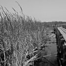 Marsh Beauty in Black and White by Heather Paakkonen