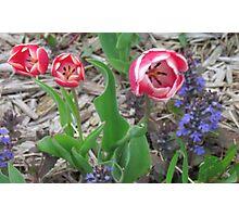 Grandmas Flower Garden Photographic Print