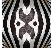Zebra Texture Pattern made with Photography of a Zebra Photographic Print