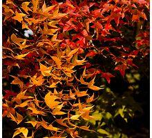 Changing Seasons by Craig Higson-Smith
