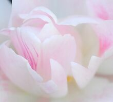 ♥Dream of Pink♥ by Rosy Kueng Photography