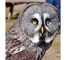 Grey Owl Photographic Print