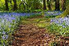 Walking Between The Flowers by CJTill