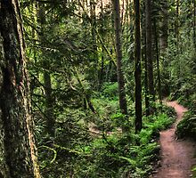 lewis and clark trail by Bruce  Dickson