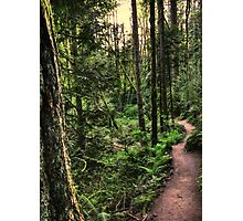 lewis and clark trail Photographic Print