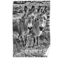 It IS What It IS - BW Print Poster Poster