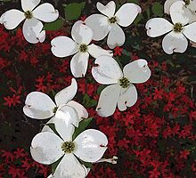 Dogwood Over Azalea 2 by Jane Jenkins