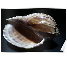Shell. Poster