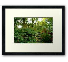 Secret Garden Framed Print