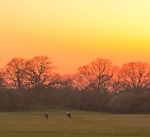 Longhorns at Knepp Castle by Paul Rhodes