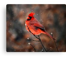 Cardinal in a Snowstorm Canvas Print